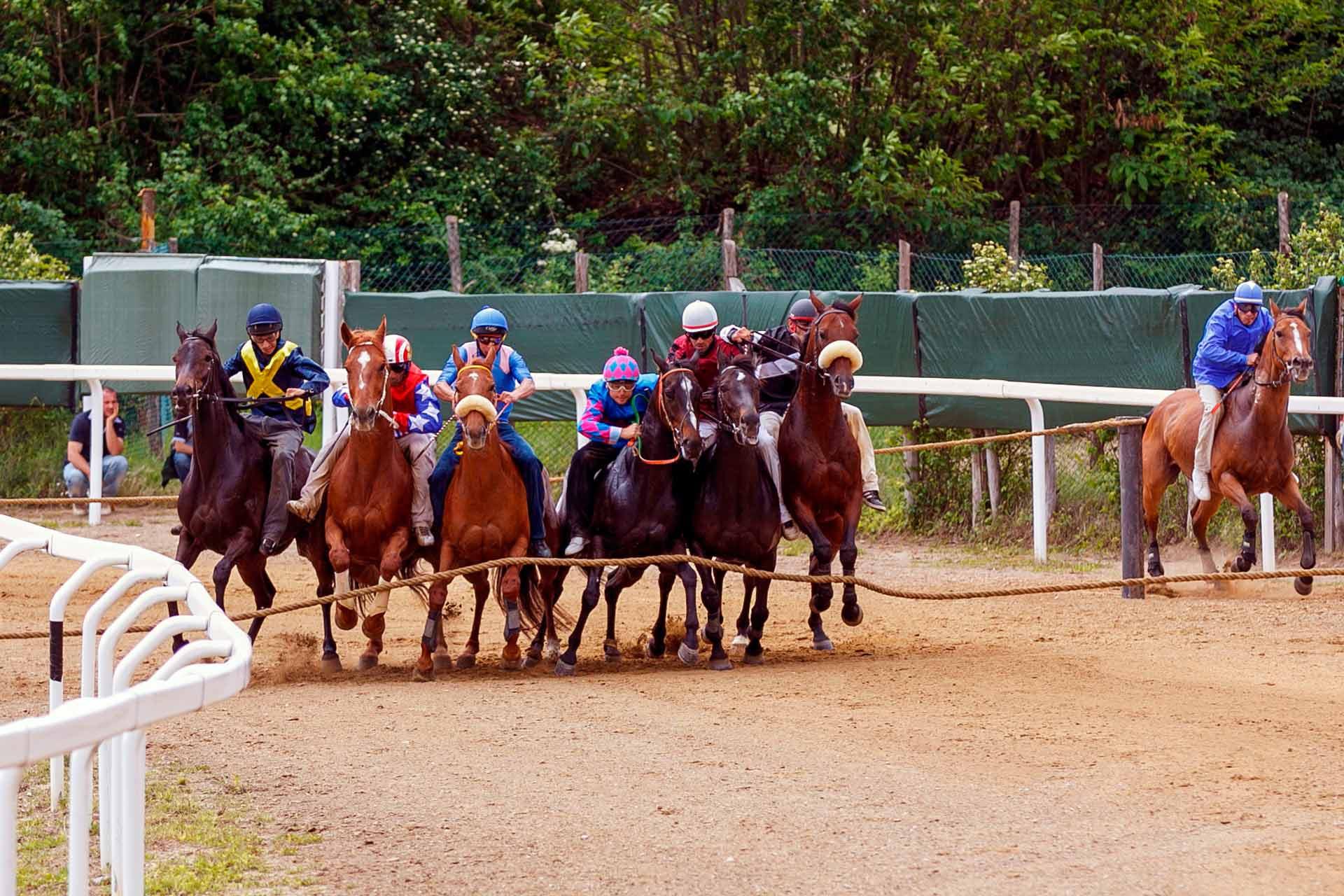 CORSE PROVA D'ADDESTRAMENTO - Viene simulata la corsa che si svolgerà a Siena il giorno del Palio. Si testa il comportamento dei cavalli tra i canapi, insieme agli altri cavalli, nelle fasi che precedono la partenza.