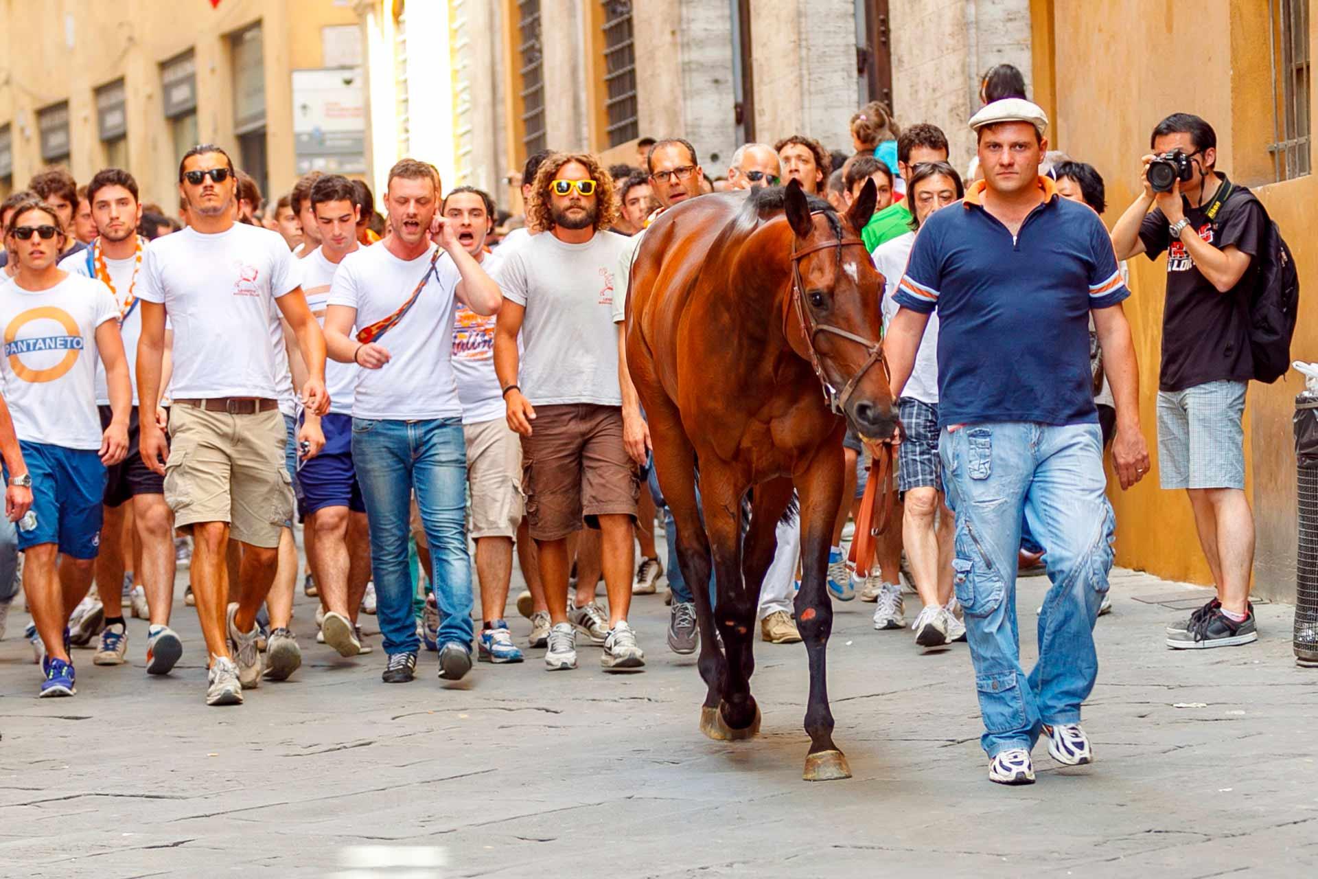 IL SORTEGGIO - Bàrbero e Barbaresco, seguiti dai contradaioli che inneggiano i canti di contrada, si trasferiscono dalla Piazza alla stalla.